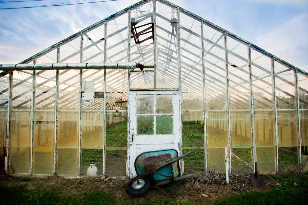 greenhouse for growing cannabis