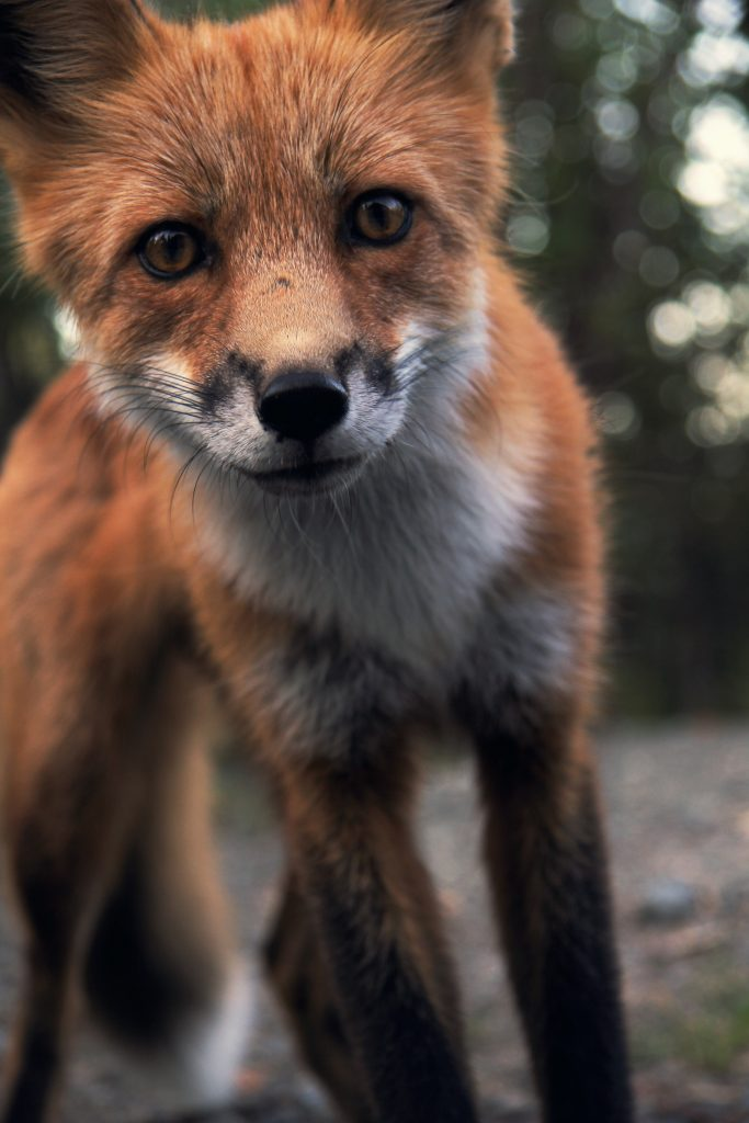 You need to be as clever as a fox to avoid hiring corporate psychopaths